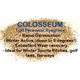 COLD START COLOSSEUM TURF PERENNIAL RYEGRASS